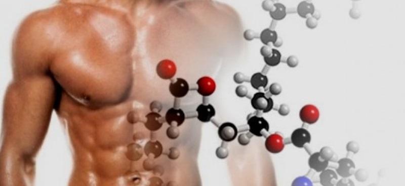 Восстановить и защитить мышцы: как выбрать и принимать аминокислоты | Каталог цен e-Katalog